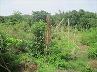 935 Sqm of Land  For Sale
