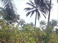 6,039 Sqm of Land  For Sale