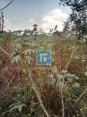 Land at Awka Anambra, Awka, Anambra